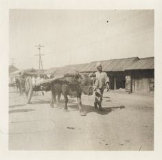 [Korean coolie leading ox and cart] 1904. A young coolie, or a laborer, leads an ox, or a bullock, harnessed to carry a cart. Collection: Willard Dickerman Straight and Early U.S.-Korea Diplomatic Relations, Cornell University Library [enhanced from original]