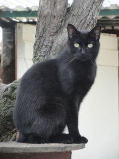 ГўgГ©s de noirs chatte