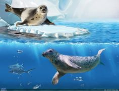 Seal slow and fast Seal Cartoon, Cartoon Art, Harp Seal, Arctic Animals, Winter Art, Animals Of The World, Marine Life, Animal Paintings, Cute Drawings