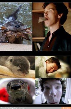 Sherlock Otter, Sherlock Holmes Funny, Sherlock Meme, Sherlock Cast, Sherlock Series, Sherlock John, Benedict Sherlock, Benedict Cumberbatch Sherlock, Johnlock