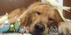 犬と小鳥とハムスターが一緒に住めるのかって?彼らの暮らしをとらえた画像を見れば、友情は本物だって分かるはずさ。