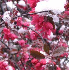 Snow in London in April