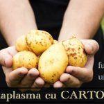 Metabolism Lent - Sfaturi Dr. Mihaela Bilic   La Taifas Metabolism, 3, Potatoes, Vegetables, Food, Potato, Essen, Vegetable Recipes, Meals