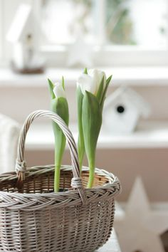 It's a beautiful world French Baskets, Farmhouse Garden, White Tulips, Rose Cottage, Colorful Garden, Spring Home, Flower Basket, Pretty Flowers, Blue Bird
