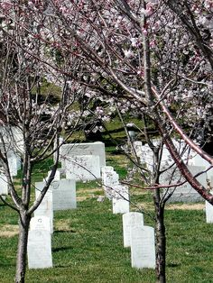 Arlington National Cemetery, Arlington, VA