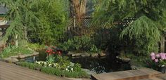 Make a garden koi pond from an old in-ground swimming pool. Great alternate use for an old outdoor pool. No more chemicals and creates a great backyard habitat. Diy instructions.