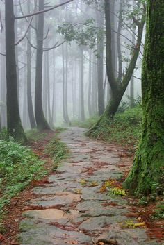 fog in the woods Beautiful Places, Beautiful Pictures, Natures Path, All Nature, Walk In The Woods, Garden Paths, Pathways, Beautiful Landscapes, The Great Outdoors