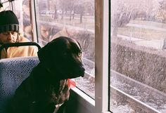 В трамвай №5 се вози най-тъжното куче в София! (СНИМКА) - http://novinite.eu/v-tramvaj-5-se-vozi-naj-tazhnoto-kuche-v-sofiya-snimka/