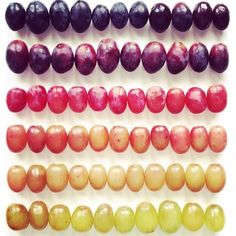 Arcoiris de uvas! #winelovers