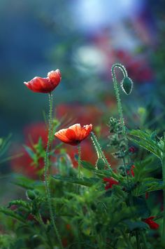 Photograph bloom by AMITABH KUMAR on 500px