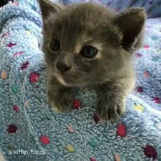 When cats aren't sleeping, they have to do something to pass the time. If left unchecked, cats tend to climb on furniture and scratch your belongings. Cute Baby Cats, Cute Cats And Kittens, Cute Little Animals, Cute Funny Animals, Kittens Cutest, Funny Cats, Cool Cat Trees, Cool Cats, Gato Gif