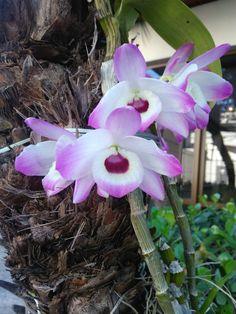 Orquídea recuperada de um cesto de lixo.