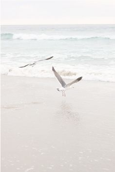 ocean and seagulls Beach Aesthetic, White Aesthetic, Aesthetic Vintage, Outlander, Salt And Water, Beach Bum, Summer Vibes, Sea Shells, Seaside