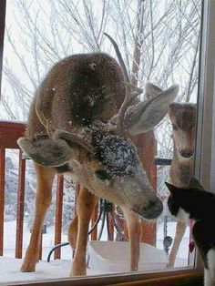 ~ This could easily be one of our kitties. My husband and I live in the mountains so deer are always in our front yard foraging for food. But staring at one of our cats would be a first b/c deer are always so fearful. Nature Animals, Animals And Pets, Baby Animals, Funny Animals, Cute Animals, Funny Cats, Cute Creatures, Beautiful Creatures, Animals Beautiful