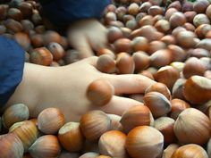 Lieskovce!!!  #lieskovce #lieskoveorechy #orechy #jesen #vyziva #zdravastrava #hazelnuts #autumn #nitra #slovensko #slovakia #restauracia #rastlinnastrava #veganfood #vegan #plantpower #vegetarian #bio #organic