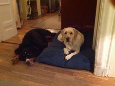 Nora with her Best Dog Friend Sara