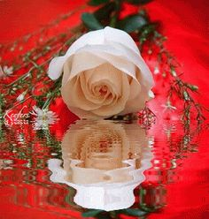 Animated Flowers. Animations, Reflection, Water Reflections, Animated Graphics, Animated Gif, Animated Gifs, Colour Splash, Flower, Roses, Flores, Flores, Reflections, Rosas, Color Splash, Flowers, Beautiful Flowers, Keefers gif by Keefers_ | Photobucket