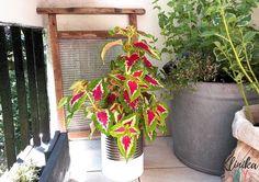 Balkon zero watse - pomysły diy Zero, Plants, Diy, Balcony, Bricolage, Do It Yourself, Plant, Homemade, Diys