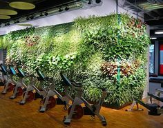 LivePanel is a sustainable living wall system for both outdoors & indoors. Click here to learn more about Suite Plants & our products.