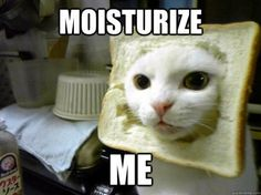 Cat in Bread Meme = Cassandra :-P Doctor Who I have never been amused by cat in bread but now I am dying