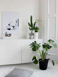 styling with plants for The Poster Club via @hegeinfrance