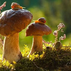 Snails Enjoying Sunlight Atop Mushrooms Makes me want to saddle one up and go for a fantasy afternoon.