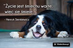 Życie jest śmiechu warte...