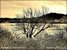 Het Vogelmeer in De Kennemerduinen heeft magische contouren. #sepia