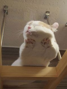 Cat Sleep On A Glass Table funny cats lol humor funny pictures funny photos funny images hilarious pictures cat