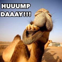 Hump day Wednesday #humpday #wednesday