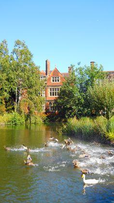 Ducks at Pembroke College.