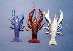 """Crawfish - """"The blue is rare. And the white is even more rare,"""" Dr. Ray McClain said. John Sonnier, research assistant to McClain, tried to line up the crawfish in the order of red, white and blue for a photo. But the white and blue started fighting."""