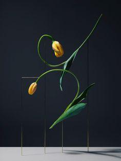 Mini Title: Carl Kleiner, Qui Yang, Blommers & Schumm
