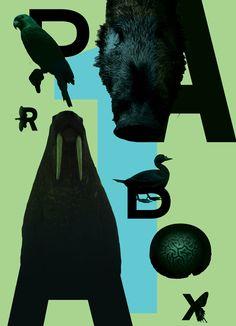 Animal Alphabet by Kai Damian Matthiesen, via Behance