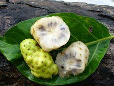Owoc noni inaczej zwany Morwą Indyjską. Owoc Noni wygląda jak jajo Obcego, pochodzi z Azji Południowo-Wschodniej. Owoce te w tradycyjnej medycynie stosuje się w leczeniu bólów miesiączkowych, niedrożności jelit i zakażenia dróg moczowych.