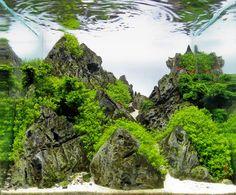 3 rank Swee   - Concurso Aquagora de Paisagens Aquáticas 2014