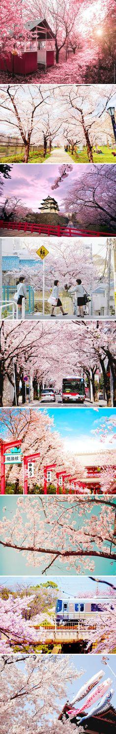 三月,这是个春回大地、繁花即将盛开的月份,樱花将陆续开放。 Japan Countryside, City Lights, Cherry Blossom, Gardening, Landscape, Canvas, Natural, Crafts, Photography