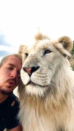 Cute Wild Animals, Cute Little Animals, Cute Funny Animals, Animals Beautiful, Animals And Pets, Cute Cats, Beautiful Lion, Cute Animal Videos, Cute Animal Pictures