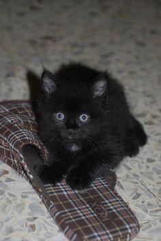 gatta ciccia ( page fb )