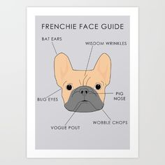 New In Store The French Bulldog Face Guide