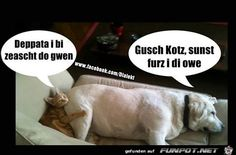 gusch Humor, Funny, Dogs, Animals, Humorous Sayings, Funny Pics, Funny Stuff, Cats, Animales