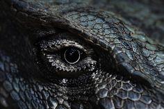 theleoisallinthemind:dragon eye of indigo blue (by paloetic)