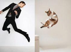 マイケル・ファスベンダー VS 猫