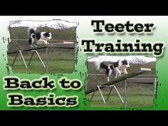 Agility Dog Training, Teeter Totter Training, Pam's Dog Academy www.pamsdogtraining.com Pamela Johnson, Dog Tricks and Dog Training too!