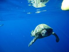 Swim with the Turtles on Maui - My friend did and she took this photo :)