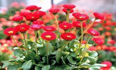 Beautiful Birds, Container Gardening, Green, Plants, Photography, Flowers, Photograph, Fotografie, Photo Shoot