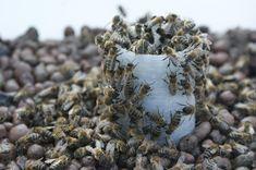 Krmení včel Jakubovským včelařským krmítkem Pictures