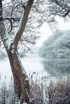 Christmas snow at OsmerePhoto by Julie Sumner on Getty Images
