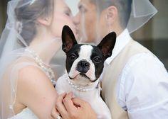#BostonTerrier #wedding #bride #groom #JillCarmel #weddingdog