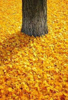 Autumn's carpet